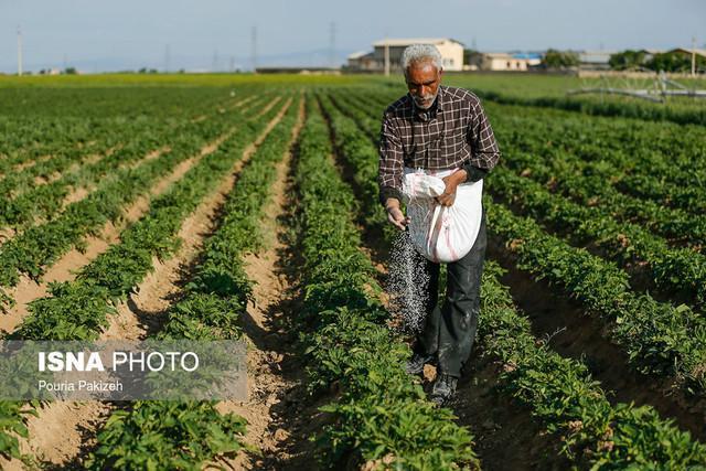 حل مشکل سیب زمینی کاران خراسان شمالی با تغییر زمان کشت این محصول از بهار به پاییز