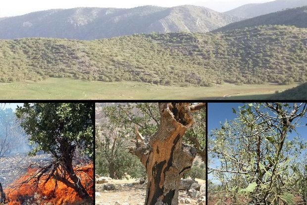 ارزیابی روش های مناسب پایش خشک شدن جنگل های زاگرس