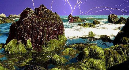 زیست فناوری دریا در فراوری ناخالص ملی سهیم می گردد