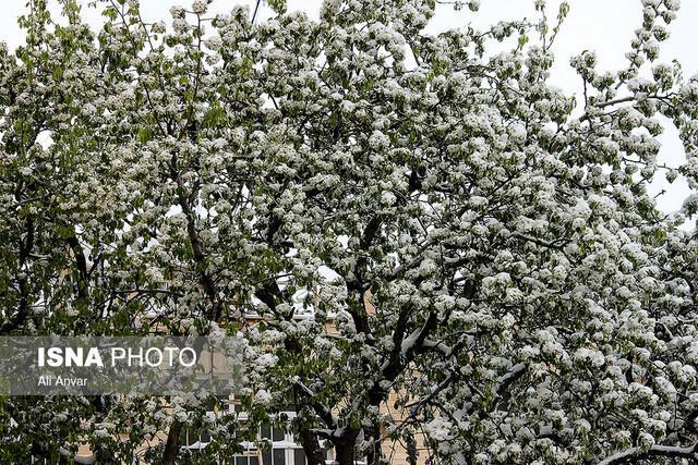 جشن بهارانه با حضور در ایران رقم خورد